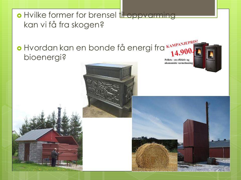 Hvilke former for brensel til oppvarming kan vi få fra skogen