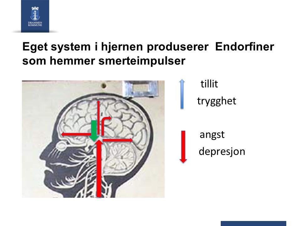 Eget system i hjernen produserer Endorfiner som hemmer smerteimpulser