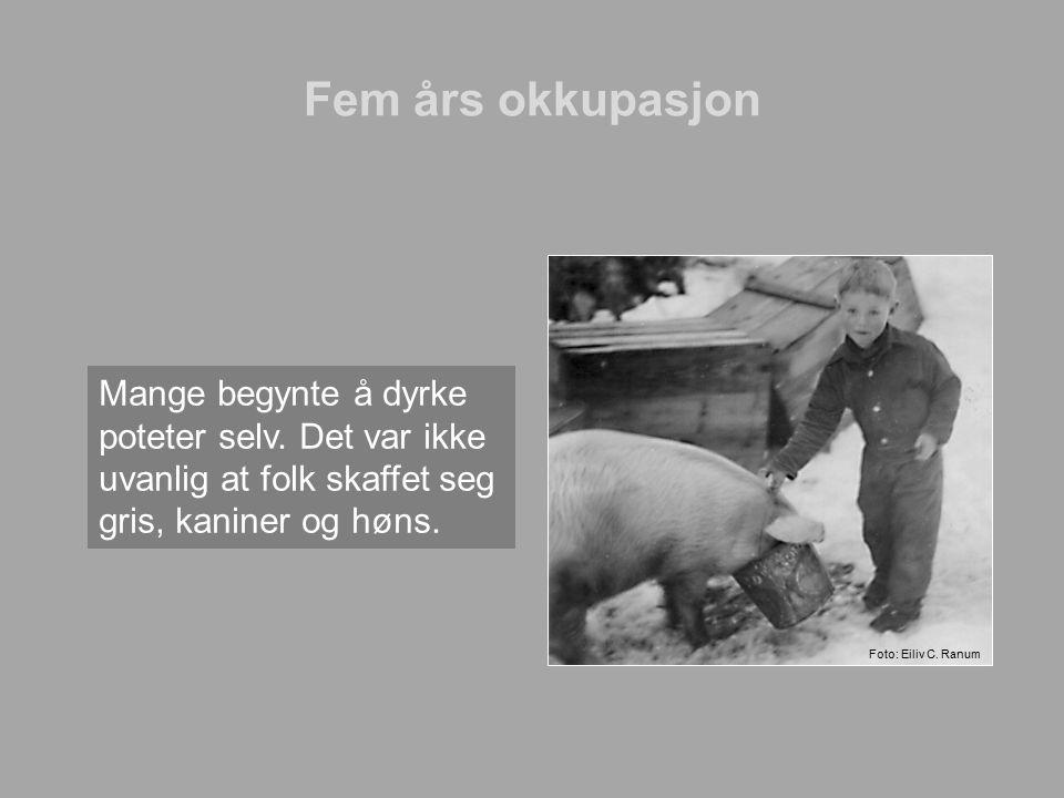 Fem års okkupasjon Mange begynte å dyrke poteter selv. Det var ikke uvanlig at folk skaffet seg gris, kaniner og høns.