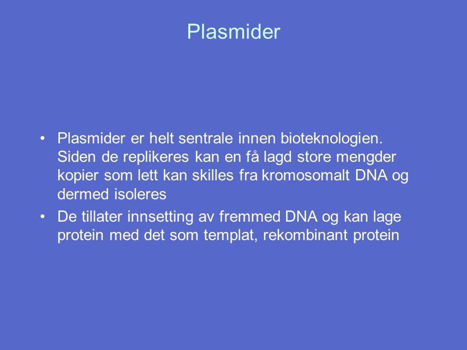 Plasmider