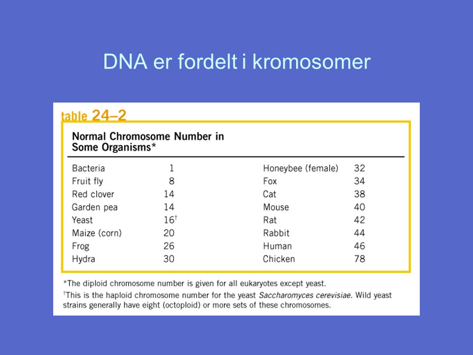 DNA er fordelt i kromosomer