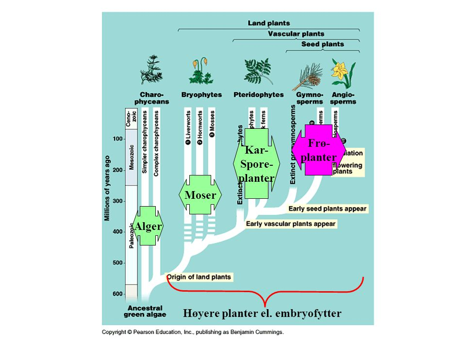 Høyere planter el. embryofytter