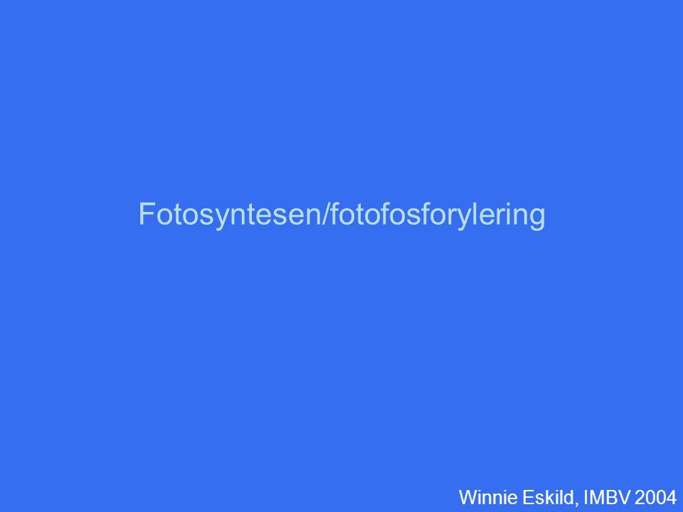 Fotosyntesen/fotofosforylering