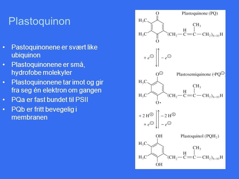 Plastoquinon Pastoquinonene er svært like ubiquinon