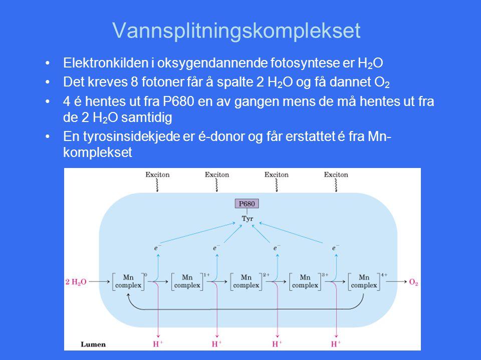Vannsplitningskomplekset