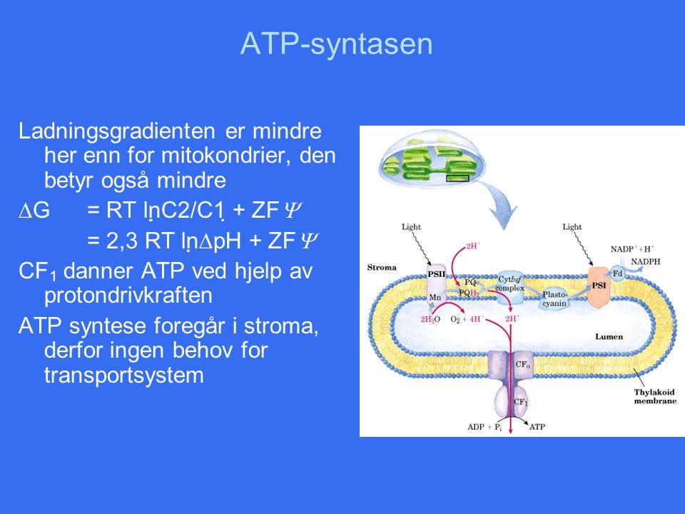 ATP-syntasen Ladningsgradienten er mindre her enn for mitokondrier, den betyr også mindre. G = RT lnC2/C1 + ZF