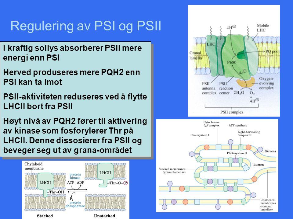 Regulering av PSI og PSII