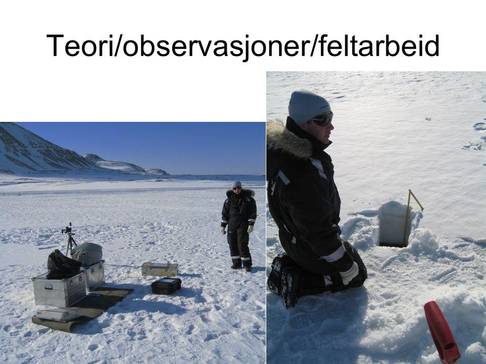 Teori/observasjoner/feltarbeid