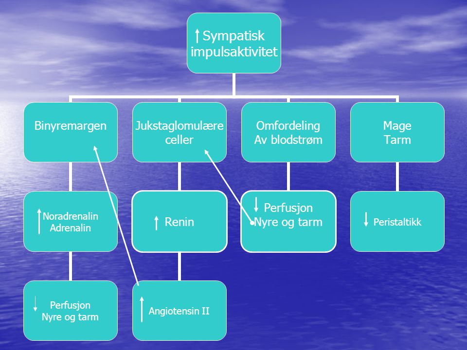 Via økt Renin-konsentrasjon blir det dannet angiotensin II