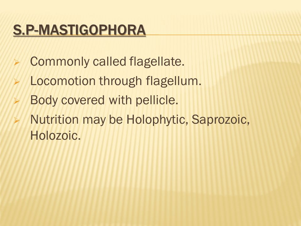 S.P-Mastigophora Commonly called flagellate.