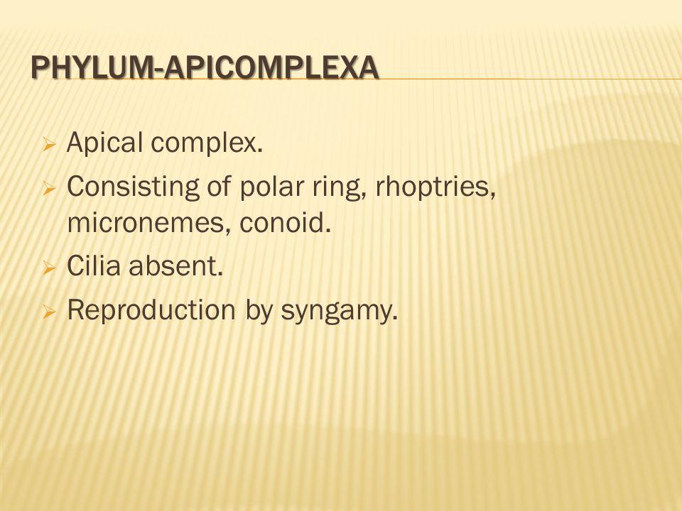 Phylum-Apicomplexa Apical complex.