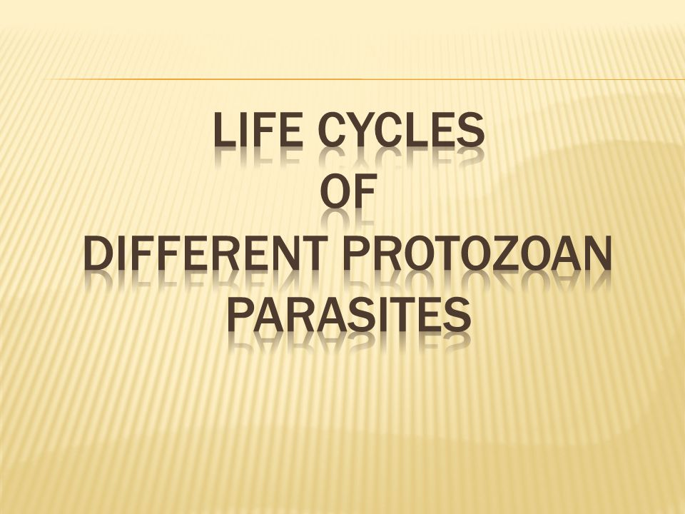 LIFE CYCLEs OF DIFFERENT PROTOZOAN PARASITES