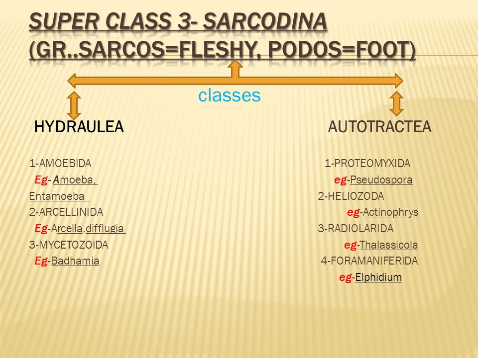 Super class 3- Sarcodina (Gr..sarcos=fleshy, podos=foot)