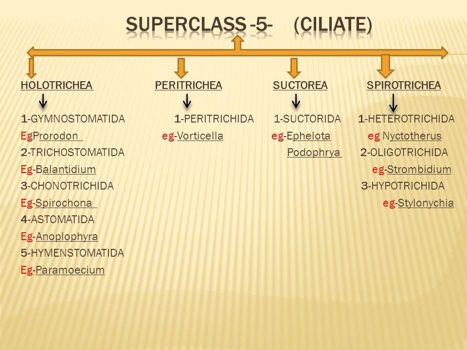 Superclass -5- (ciliate)