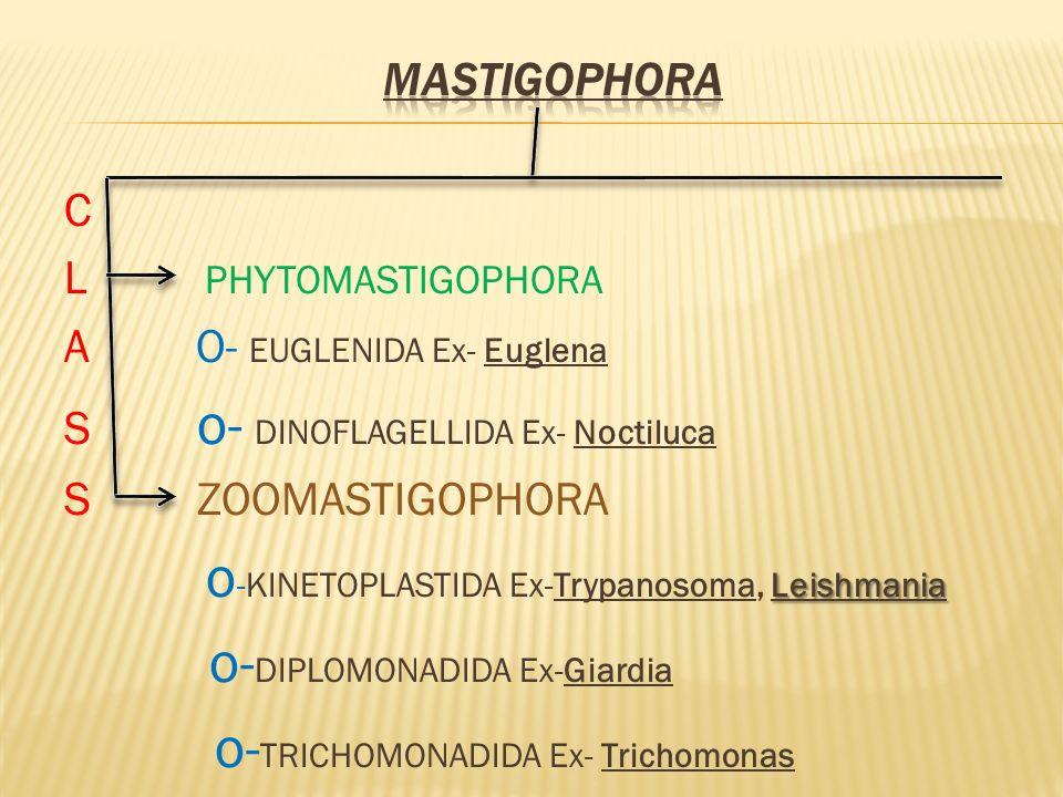 A O- EUGLENIDA Ex- Euglena S o- DINOFLAGELLIDA Ex- Noctiluca