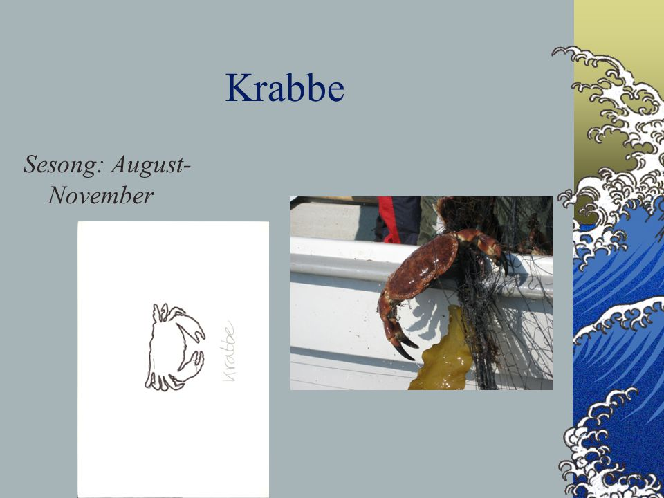 Krabbe Sesong: August- November