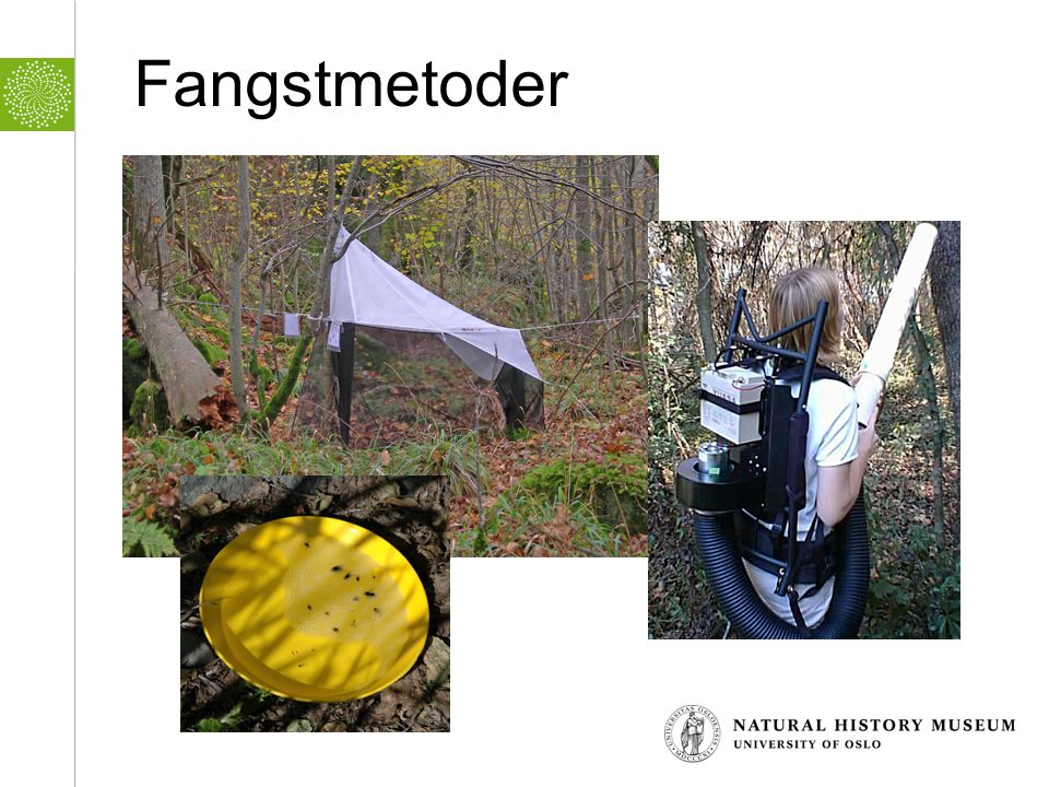 Fangstmetoder