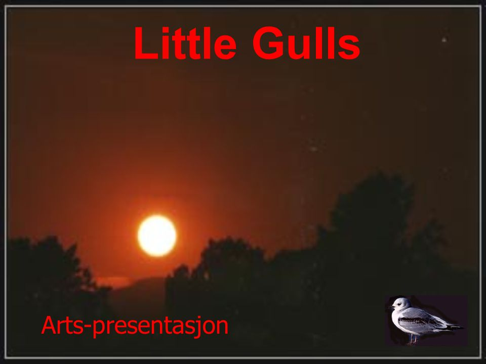 Little Gulls Arts-presentasjon
