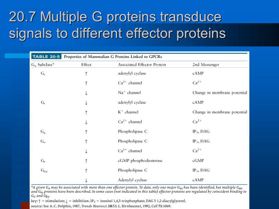 20.7 Multiple G proteins transduce signals to different effector proteins