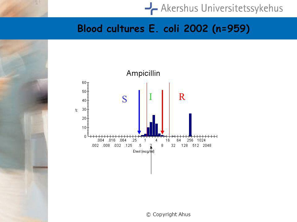 Blood cultures E. coli 2002 (n=959)