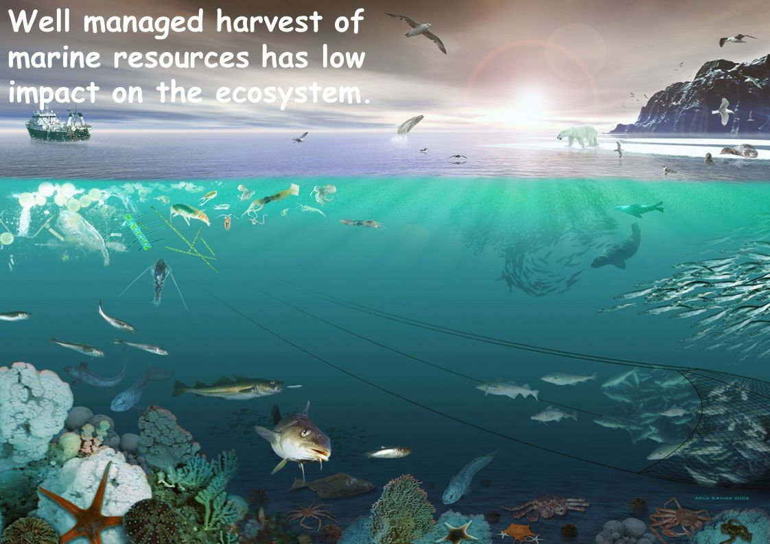 Well managed harvest of marine resources has low impact on the ecosystem.